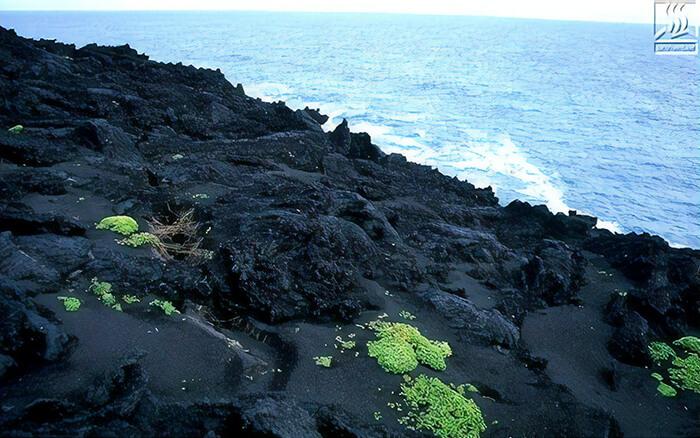 остров Сюртсей в Исландии
