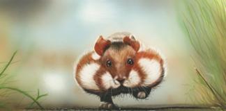 фото хомячков, хомяки в дикой природе, дикие хомячки